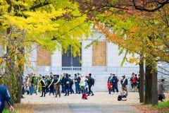 大阪,日本- 2017年11月20日:叶子在秋天上的颜色变化 免版税库存照片