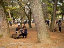 大阪,日本- 2017年7月05日:喂养野生鹿的未认出的妇女在休息在树下的大阪在大阪停放 库存照片