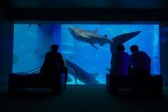 大阪,日本- 2017年7月18日:拍照片和享用海生物的游人的阴影在大阪水族馆 库存图片