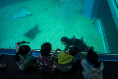 大阪,日本- 2017年7月18日:享用海生物和和看潜水者的未认出的孩子大阪水族馆 免版税库存图片