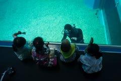 大阪,日本- 2017年7月18日:享用海生物和和看潜水者的未认出的孩子大阪水族馆 库存照片
