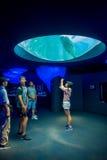 大阪,日本- 2017年7月18日:在大阪水族馆Kaiyukan火光环的Dolphing水族馆,一最大的公众 免版税库存图片