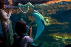 大阪,日本- 2017年7月18日:在大阪水族馆Kaiyukan,其中一个的海豚在世界的最大的公开水族馆 库存图片