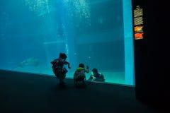 大阪,日本- 2017年7月18日:拍照片和享用海生物的未认出的人民在大阪水族馆 免版税库存照片