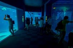 大阪,日本- 2017年7月18日:拍照片和享用海生物的未认出的人民在大阪水族馆 库存照片