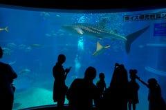 大阪,日本- 2017年7月18日:拍照片和享用海生物,鲨鱼鲸鱼的未认出的人民在大阪 免版税图库摄影