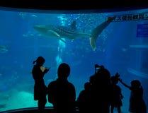 大阪,日本- 2017年7月18日:拍照片和享用海生物,鲨鱼鲸鱼的未认出的人民在大阪 免版税库存照片