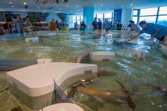 大阪,日本- 2017年7月18日:未认出的人民在一个现代区域的享用和接触海洋动物在Kiyukan 免版税库存照片