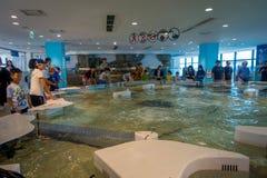 大阪,日本- 2017年7月18日:未认出的人民在一个现代区域的享用和接触海洋动物在Kiyukan 免版税库存图片