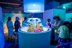 大阪,日本- 2017年7月18日:看起来五颜六色的珊瑚礁和鱼在一小fishbowl里面的未认出的人民  库存照片