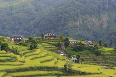 大阳台、米领域和村庄在喜马拉雅山 免版税库存图片