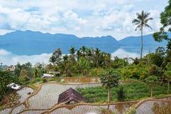 大阳台在马宁焦湖(Danau Maninjau)附近的米领域 库存照片