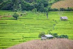 大阳台米农场 库存照片