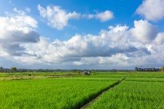 大阳台米在一个晴天调遣在巴厘岛,印度尼西亚 免版税图库摄影