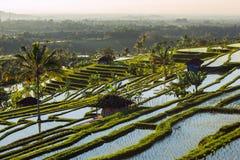 大阳台米在一个晴天,巴厘岛调遣 图库摄影