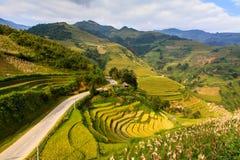 大阳台米在越南的西北部的山调遣 免版税图库摄影
