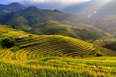 大阳台米在越南的西北部的山调遣 免版税库存照片