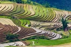 大阳台米在Sapa -越南 库存图片