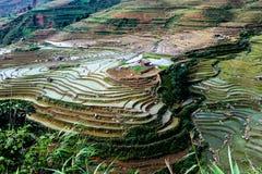 大阳台米在Sapa -越南 免版税图库摄影