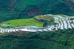 大阳台米在Sapa -越南 免版税库存照片