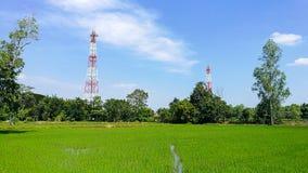 年轻大阳台米种植园在一明亮的天 库存照片