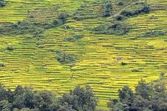 大阳台米领域在尼泊尔 免版税库存照片
