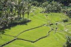 大阳台米领域,巴厘岛,印度尼西亚 免版税库存照片