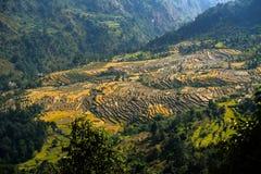 大阳台领域在秋天在尼泊尔 免版税库存照片