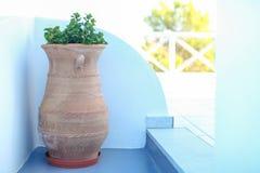 大陶瓷与植物希腊海岛场面 免版税库存照片