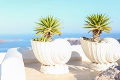 大陶瓷与植物希腊海岛场面 免版税图库摄影