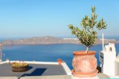 大陶瓷与植物希腊海岛场面 库存图片