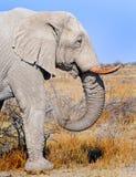 大雄象外形有精采蓝天背景 库存图片
