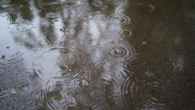 大雨下落在沥青的 下着雨 从雨的泡影 股票视频