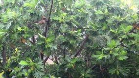 大雨在林木和倾吐的雨中 股票视频