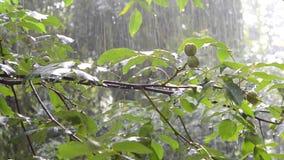 大雨天绿色留下树夏天 股票视频