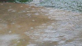 大雨秋天下落在沥青的 热带降雨量 股票视频