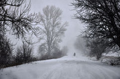大雪和blizzard_14 免版税库存照片