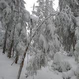 大雪在森林里 免版税图库摄影
