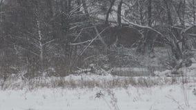 大雪(风暴),飞雪 大雪,一个被放弃的房子 股票视频