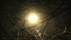 大雪Timelapse在城市在晚上 影视素材