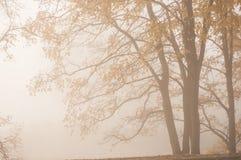 大雾在城市公园在秋天的早晨 库存图片