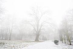 大雾在第一雪以后的公园 免版税图库摄影