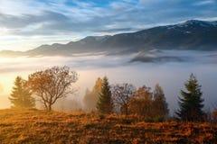 大雾,象牛奶,盖了谷,在后上升山小山,太阳的秋天温暖的光芒 库存照片