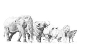 大非洲人五动物 与铅笔的剪影 库存例证