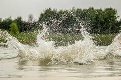 大飞溅水在湖反对森林的背景 库存图片