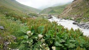 大高加索山脉范围的河 图库摄影