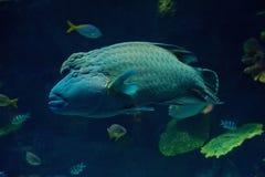大鱼 免版税库存照片
