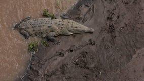 大鳄鱼在哥斯达黎加 免版税库存照片