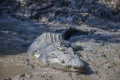 大鳄鱼在阿德莱德河,卡卡杜国家公园,达尔文,澳大利亚附近命名了'罗马政治家' 免版税库存图片