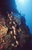 大鳄鱼深礁石 免版税库存图片